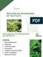 K Nutrition of Alfalfa