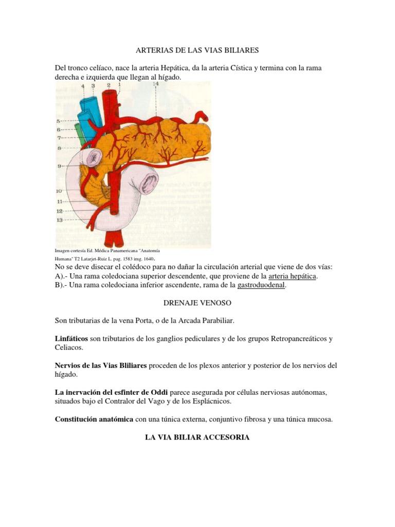 Arterias de Las Vias Biliares