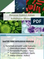 Peranan Bakteri Dalam Kehidupan Manusia