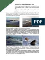 Contaminacion de Los Hidrocarburos en El Mar.docx22222222222 (2)