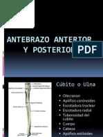Antebrazo Anterior y Posterior[1]