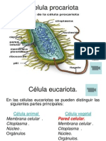 celulas eucariotas