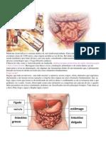 A medicina Ayurvédica.docx