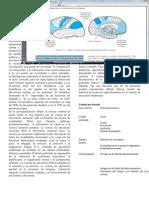 Cap 11 - Trastornos de Las Funciones Cerebrales Superiores
