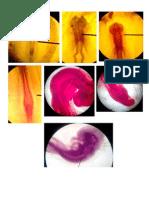 Perkembangan Embrio Ayam