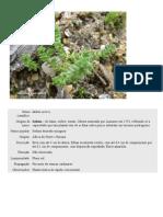Arquivo de Plantas