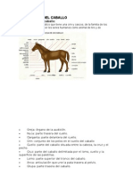 Estructura Del Caballo
