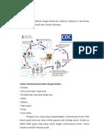 Diagnosis,Prognosis,Penyakit Schistosomiasis