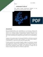 Cromosoma Filadelfia.doc3
