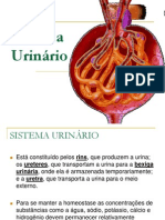 Sistema Urin%c1rio
