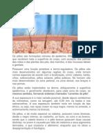 Anatomia e Fisiologia do Pêlo 5