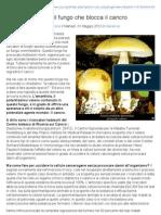Amanita Falloide, il fungo che blocca Il cancro