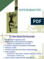 enterobakter