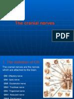 Cranial Nerve 1st