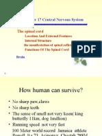 脊髓外形及内部结构