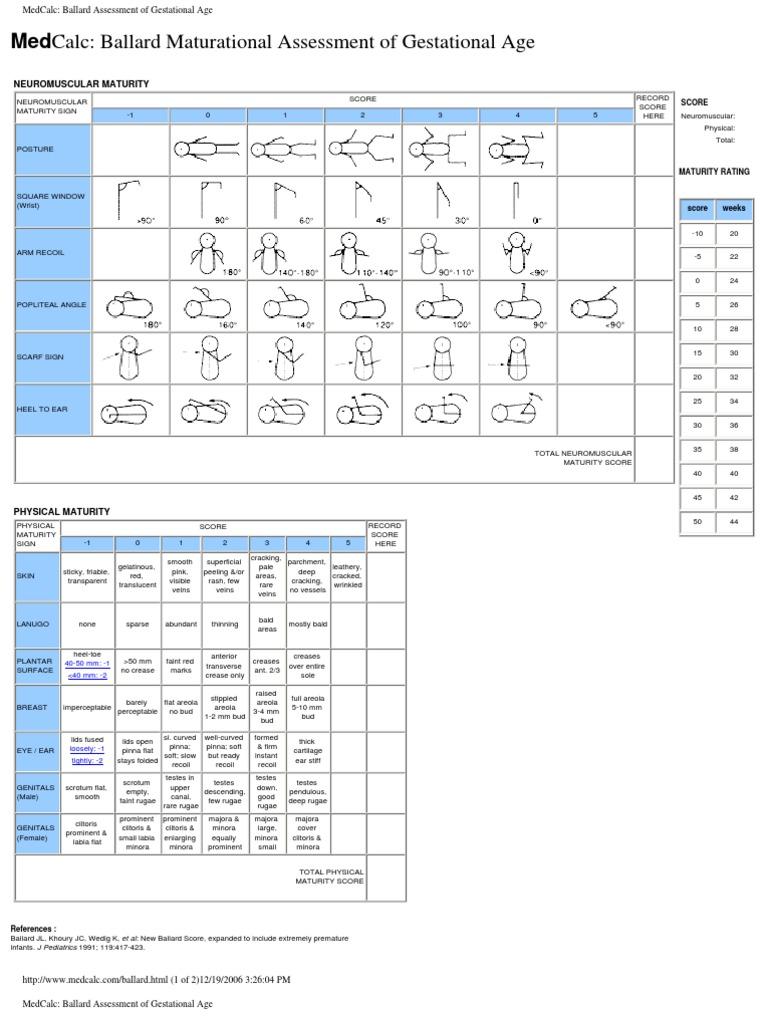 medcalc ballard assessment of gestational age | clitoris | labia