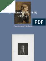 Les Liliacées (1802-1816) de P.-J. Redouté