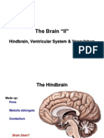 89229681 the Brain 2 E Learning 1
