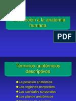01 Introducción anatomía