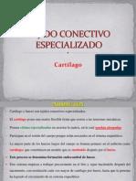 03.- Cartilago y Hueso