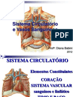 Sistema Circulatorio Edu Fisica
