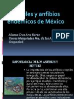 ReptilesAnfibios Alonso y Torres