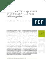 Domesticar microorganismos en un biorreactor