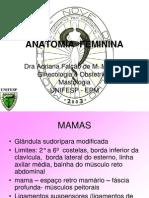 Anatomia Feminina