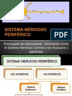 9. Sistema Nervioso Periferico (1)