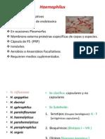 Haemophilus, Bordetella, Gardnerella