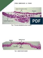 05_20_18_23LP_4-Embriologie_pasari__mamifere