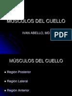 6498430 Musculos Del Cuello