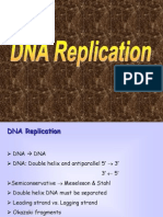 Dna Replication 2