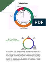 10. Ciclo_celular_Mitosis-Meiosis-2009.pdf