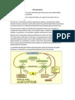 ciclo azufre