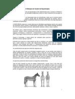 A seleção do cavalo de equoterapia