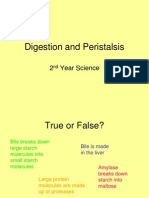 Digestion and Peristalsis