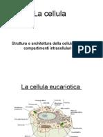 Bc1-Struttura Cellula Iweb