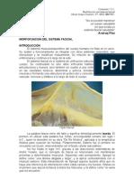 Contenido 1.3.1. Morfofunción del sistema fascial