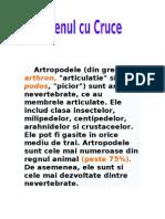 Paianjenul Cu Cruce-documentar