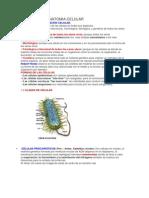 Estructura Anatomia Celular