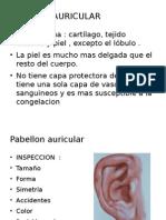 01) Revision Anatomofuncional Del Oido - Nariz - Garganta