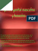 Clase 9 Genital Masculino y Femenino