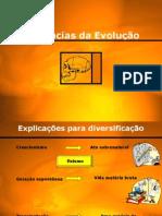 Evide_evolucao2