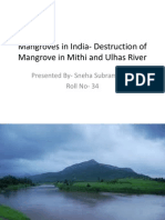 Mangroves in India- Destruction of Mangrove in Mithi