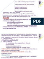24538157 Anatomia Analizatorului Vizual