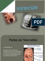 El telencéfalo diapositiva