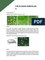 CATALAGO DE PLAGAS AGRICOLAS completo.docx