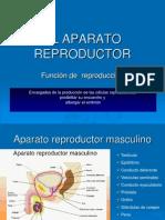 El Aparato Reproductor-power