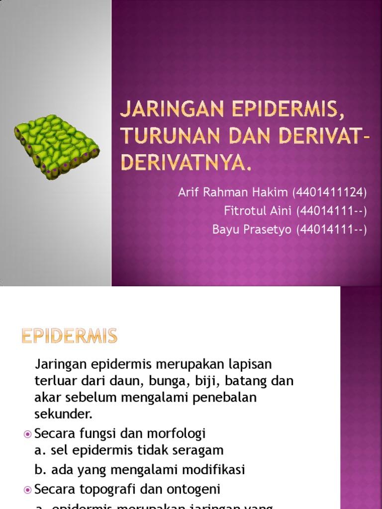 Modifikasi Epidermis 2021